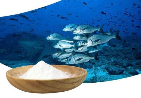 collagen từ cá