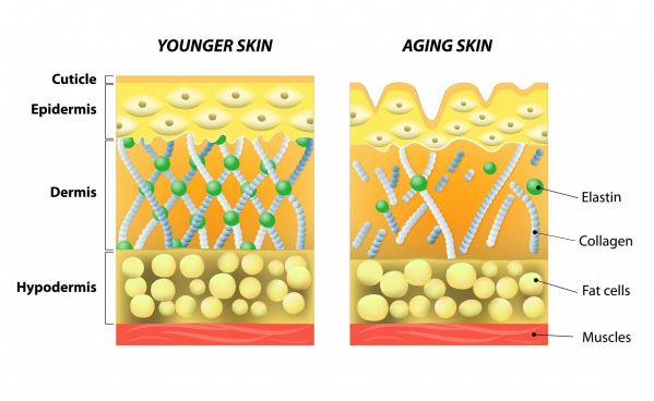 su suy giam collagen theo thoi gian
